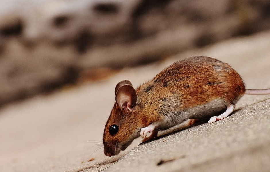 Enumclaw Pest Control Experts | Rambo Total Pest Control
