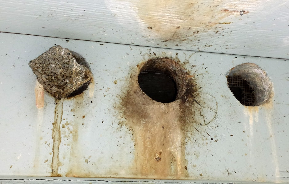 Bird Exclusion DIY - Not Recommended