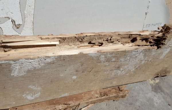 Subterranean Termites Damage to Pressure Treated Wood 2