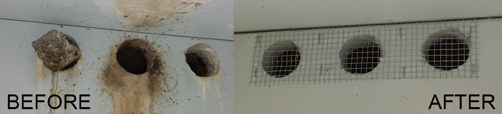 pest bird control solutions