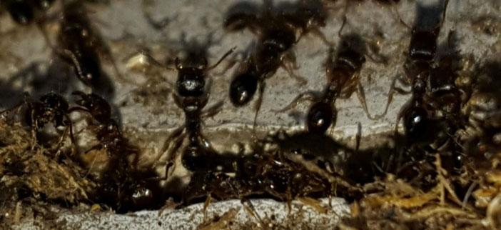 Spring Ant Season
