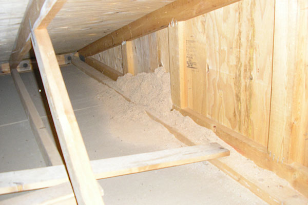 CarpenterAnt damage in rafters