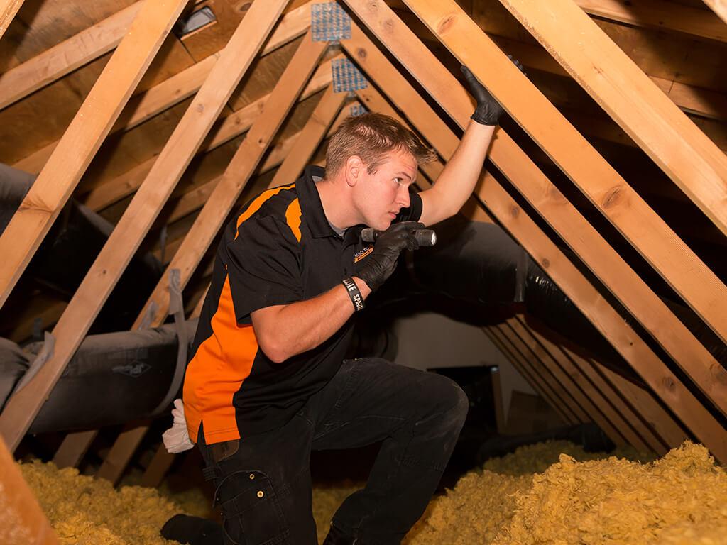 rambo attic pest inspection