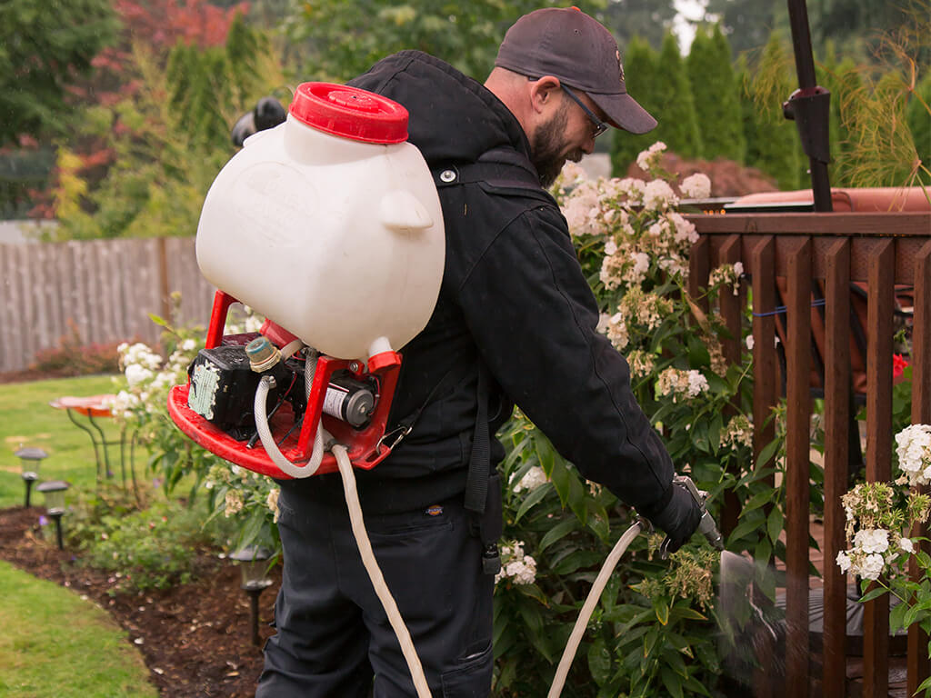 rambo pest control burien spraying