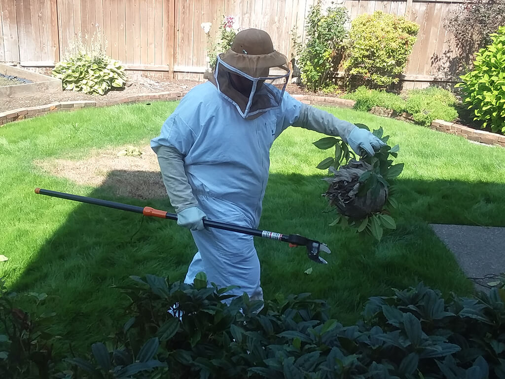 stinging insect removal rambo pest control